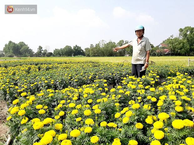 Thương lái bùng 3.000 chậu hoa vạn thọ của lão nông Sài Gòn vào 28 Tết, cộng đồng mạng chung tay mua sạch - Ảnh 9.