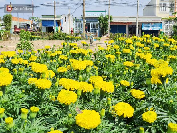 Thương lái bùng 3.000 chậu hoa vạn thọ của lão nông Sài Gòn vào 28 Tết, cộng đồng mạng chung tay mua sạch - Ảnh 4.