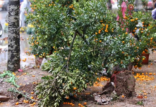 Mưa gió chiều 30, dân buôn đào quất bỏ cây chạy lấy người khiến chợ hoa hồ Đền Lừ ngập rác - Ảnh 1.