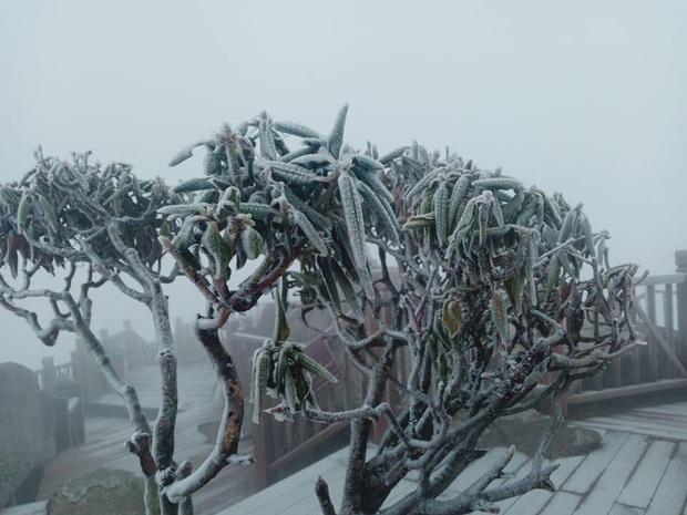 Giữa mùng 3 Tết, băng tuyết xuất hiện ở Sa Pa, dân tình lại dập dìu lên lịch cho chuyến đi đầu tiên trong năm - Ảnh 3.