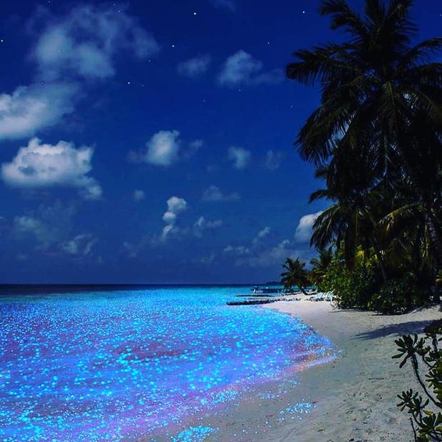 """Dân mạng nửa tin nửa ngờ trước """"bãi biển ngàn sao"""" đẹp như cổ tích ở Maldives, là có thật hay lại chiêu trò chỉnh ảnh câu like? - Ảnh 12."""