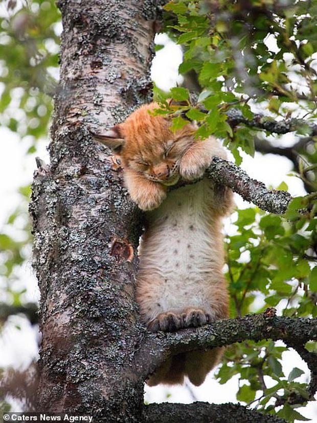 Hết Tết rồi! Dậy đi làm thôi!: Loạt ảnh động vật ngủ nướng cute hết mức khiến ai cũng phải phì cười vì bắt gặp bản thân ở trong đấy - Ảnh 4.
