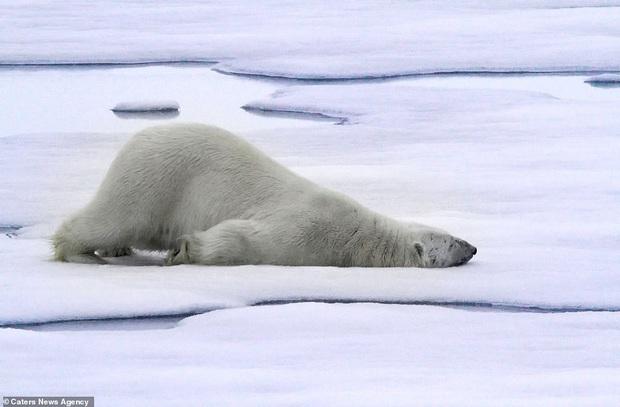 Hết Tết rồi! Dậy đi làm thôi!: Loạt ảnh động vật ngủ nướng cute hết mức khiến ai cũng phải phì cười vì bắt gặp bản thân ở trong đấy - Ảnh 5.