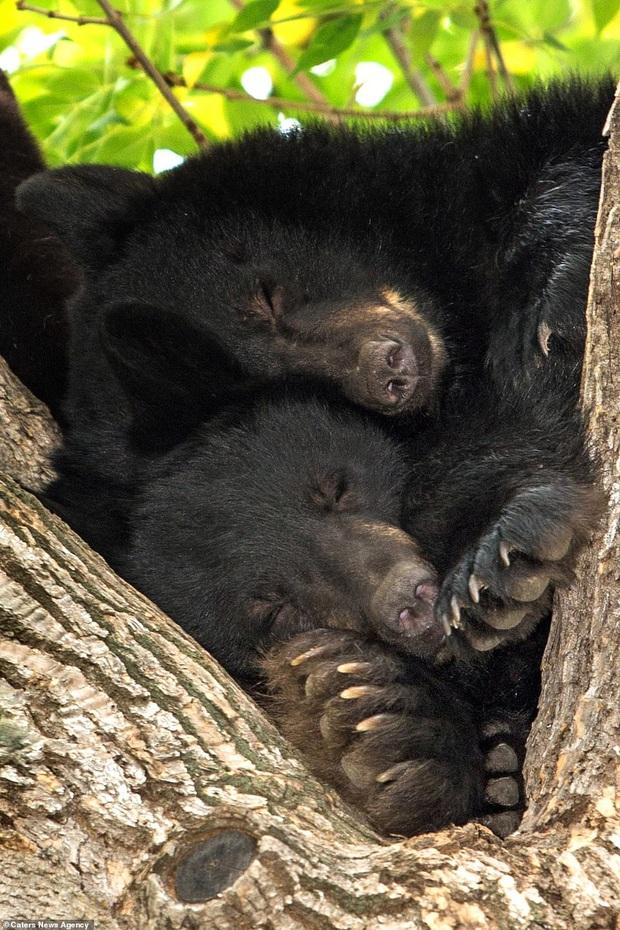Hết Tết rồi! Dậy đi làm thôi!: Loạt ảnh động vật ngủ nướng cute hết mức khiến ai cũng phải phì cười vì bắt gặp bản thân ở trong đấy - Ảnh 8.