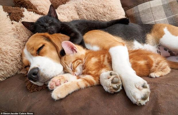 Hết Tết rồi! Dậy đi làm thôi!: Loạt ảnh động vật ngủ nướng cute hết mức khiến ai cũng phải phì cười vì bắt gặp bản thân ở trong đấy - Ảnh 9.