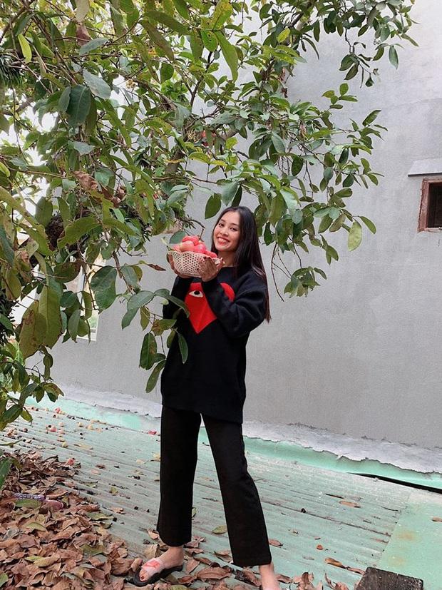 Sau H'Hen Niê, Tiểu Vy cũng thành nàng hậu giản dị nhất nhì Vbiz: Không váy áo cầu kỳ, còn đu cây hái quả ngày Tết - Ảnh 1.