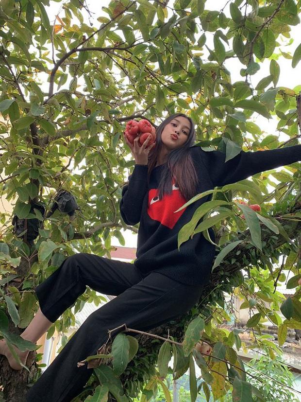 Sau H'Hen Niê, Tiểu Vy cũng thành nàng hậu giản dị nhất nhì Vbiz: Không váy áo cầu kỳ, còn đu cây hái quả ngày Tết - Ảnh 2.