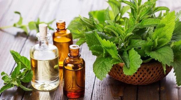 Ngoài chế độ ăn uống và tập luyện hợp lý, có 5 loại tinh dầu bạn cũng nên sử dụng để giảm cân nhanh và an toàn - Ảnh 2.