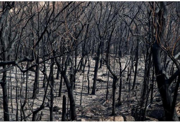 Rừng ở Úc nguy cơ cháy trở lại do nắng nóng và gió lớn  - Ảnh 1.