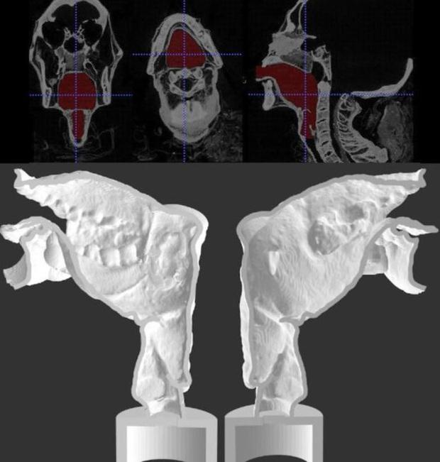 Các nhà khoa học vừa đánh thức giọng nói của một xác ướp Ai Cập 3.000 năm tuổi - Ảnh 7.
