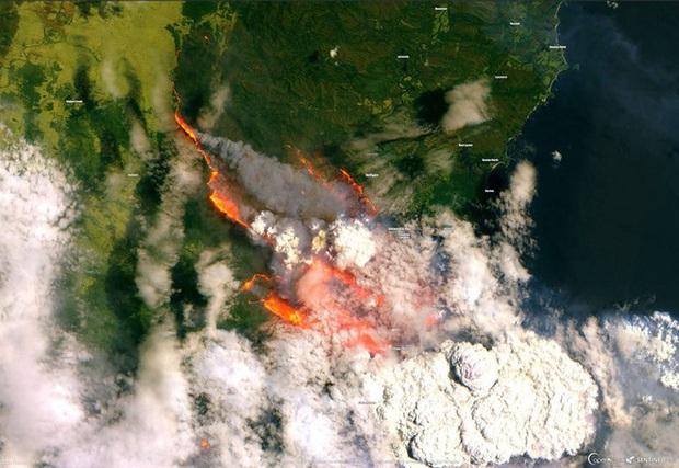 Đại thảm họa cháy rừng Úc nhìn từ không gian: Cả nước như quả cầu lửa, những mảng xanh trù phú bị thay bằng màu khói trắng tang thương - Ảnh 11.