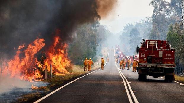 Gần NỬA TỈ sinh vật bị thiêu rụi, 1/3 số gấu koala chết cháy: Úc đang trải qua trận cháy rừng đại thảm họa thực sự mà chưa nhìn thấy lối thoát - Ảnh 12.