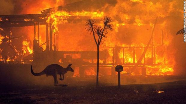 Gần NỬA TỈ sinh vật bị thiêu rụi, 1/3 số gấu koala chết cháy: Úc đang trải qua trận cháy rừng đại thảm họa thực sự mà chưa nhìn thấy lối thoát - Ảnh 1.