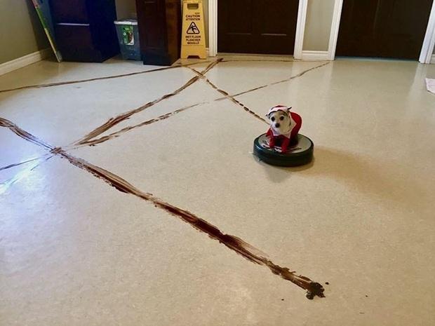 Chớ dại dùng robot hút bụi nếu nhà nuôi chó mèo, nếu không sẽ lãnh hậu quả kinh dị - Ảnh 4.