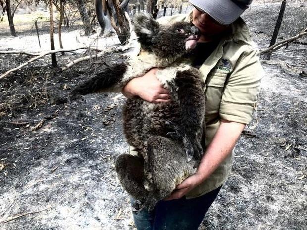 Thương quá tự nhiên ơi: Hình ảnh xót xa cho thấy đại thảm họa cháy rừng tại Úc đang khiến các loài vật bị giày vò kinh khủng đến mức nào - Ảnh 12.