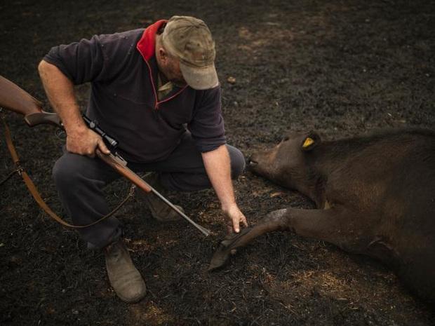 Thương quá tự nhiên ơi: Hình ảnh xót xa cho thấy đại thảm họa cháy rừng tại Úc đang khiến các loài vật bị giày vò kinh khủng đến mức nào - Ảnh 18.