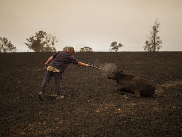 Thương quá tự nhiên ơi: Hình ảnh xót xa cho thấy đại thảm họa cháy rừng tại Úc đang khiến các loài vật bị giày vò kinh khủng đến mức nào - Ảnh 17.
