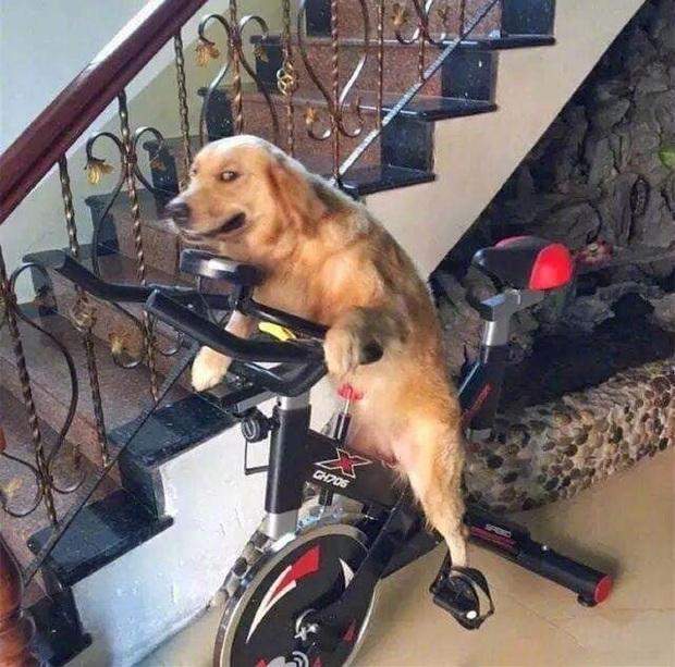 Uống say rồi bắt chó cưng... đi đạp xe tập thể dục, ông bố bị con trai bóc phốt trên MXH - Ảnh 2.