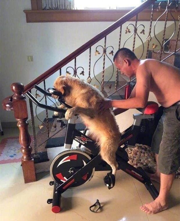 Uống say rồi bắt chó cưng... đi đạp xe tập thể dục, ông bố bị con trai bóc phốt trên MXH - Ảnh 1.