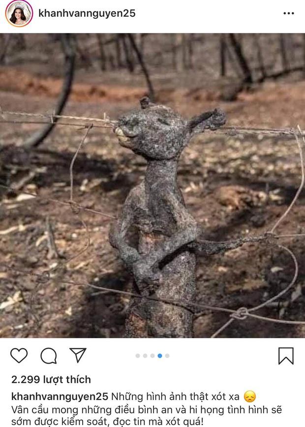 """H'Hen Niê, Hoàng Thuỳ và dàn sao Việt đồng loạt lên tiếng về thảm họa cháy rừng """"địa ngục"""" ở Úc: Xót xa nửa tỷ động vật bị thiêu rụi - Ảnh 5."""