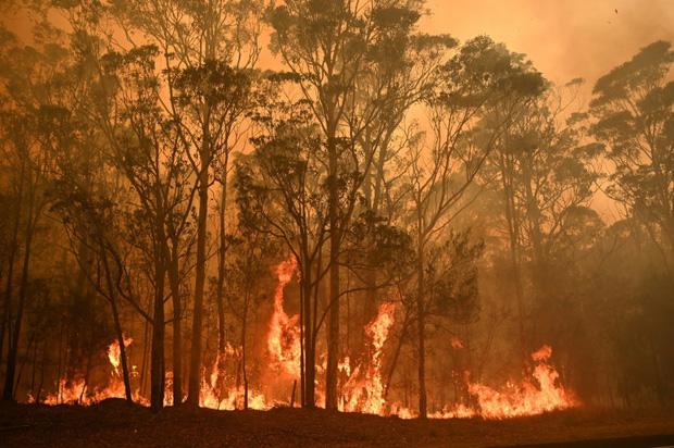Thương quá tự nhiên ơi: Hình ảnh xót xa cho thấy đại thảm họa cháy rừng tại Úc đang khiến các loài vật bị giày vò kinh khủng đến mức nào - Ảnh 21.