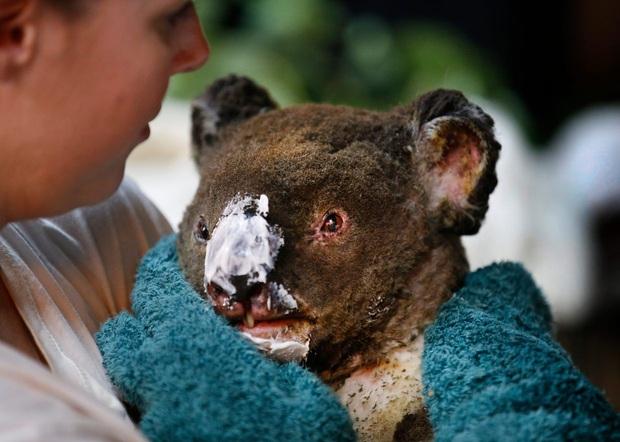 Thương quá tự nhiên ơi: Hình ảnh xót xa cho thấy đại thảm họa cháy rừng tại Úc đang khiến các loài vật bị giày vò kinh khủng đến mức nào - Ảnh 7.