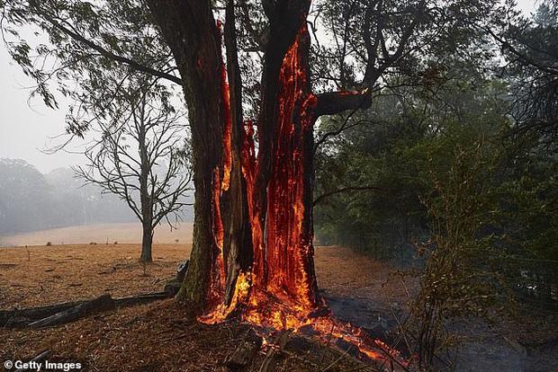Ơn trời mưa rồi! Trận mưa lớn cứu tinh cho đại thảm họa đã xuất hiện, nhiệt độ giảm làm dịu cơn bão lửa tại Úc - Ảnh 2.