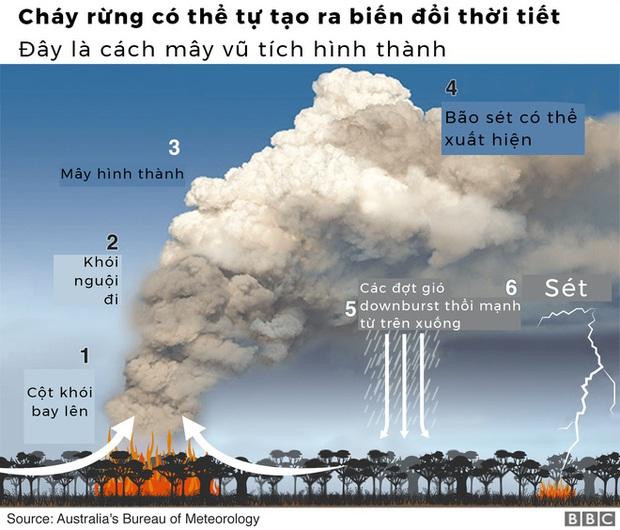 Lý giải trực quan về đám cháy khủng khiếp tại Úc: nhiệt lượng từ đâu, tại sao cháy rừng lại gây bão sét, người ta có chạy thoát được ngọn lửa không? - Ảnh 5.