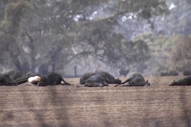 """H'Hen Niê, Hoàng Thuỳ và dàn sao Việt đồng loạt lên tiếng về thảm họa cháy rừng """"địa ngục"""" ở Úc: Xót xa nửa tỷ động vật bị thiêu rụi - Ảnh 10."""