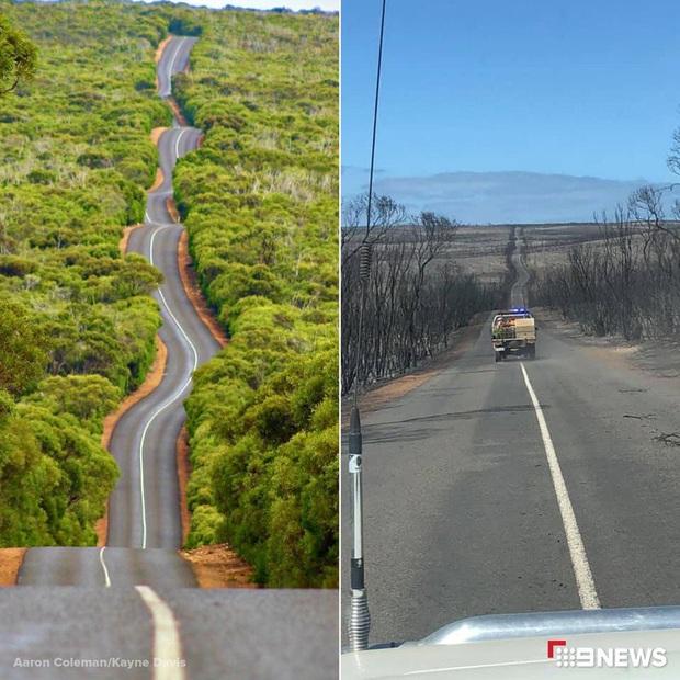 Nước Úc trước và sau thảm họa: Cánh rừng xanh mướt đầy sức sống nay chỉ còn là đống tro tàn, mái nhà của Kangaroo bị huỷ hoại - Ảnh 1.