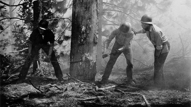 3 bộ phim gây ám ảnh tột độ về nạn cháy rừng, kinh hoàng đến mấy cũng không bằng đại thảm họa ở Úc - Ảnh 4.