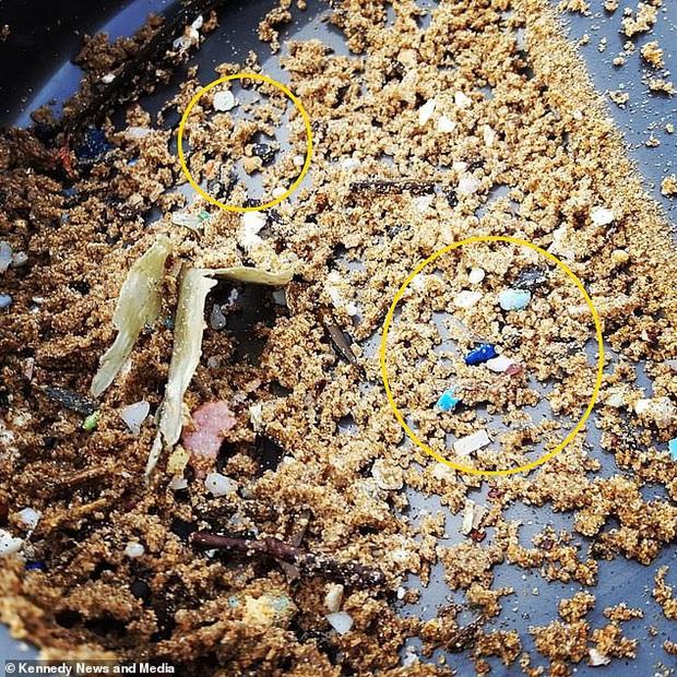 Hình ảnh kinh hoàng xác cá heo nằm ngay bên cạnh núi rác thải là minh chứng cho sự nguy hiểm của đồ nhựa đối với hệ sinh thái biển - Ảnh 3.