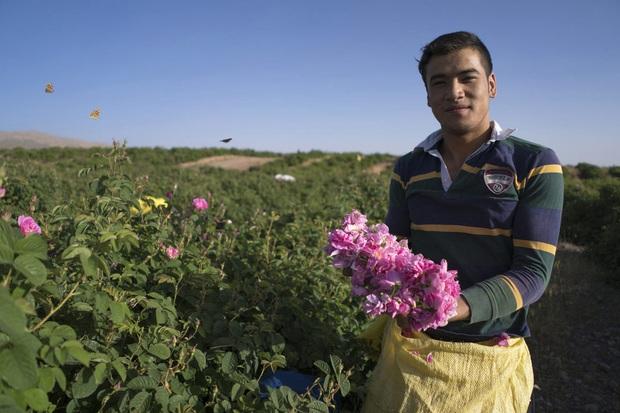 Câu chuyện về những bông hồng thơm nhất thế giới của Iran: Cả một thị trấn toàn hoa hồng, người dân làm một tháng là đủ tiền tiêu cả năm không hết - Ảnh 3.
