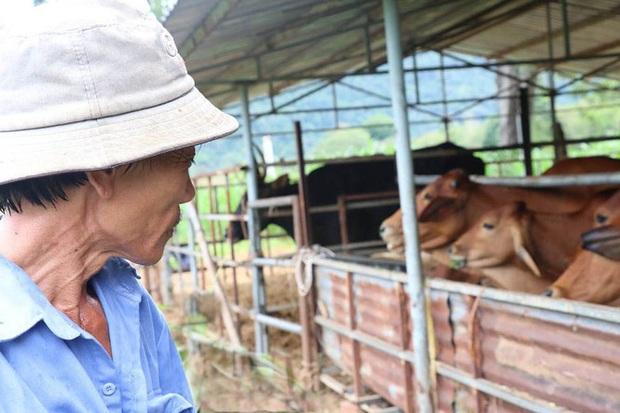 Người chăm đàn bò tót gen quý gầy trơ xương: Chờ được tiền xuống thì bò chết - Ảnh 3.