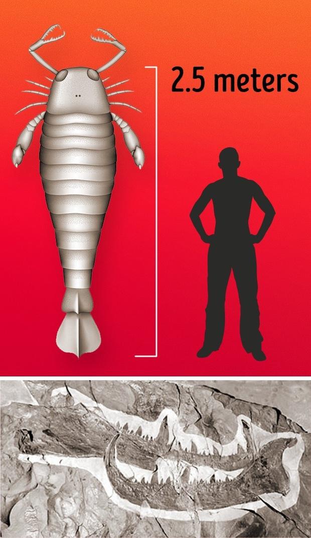 Choáng ngợp trước loạt ảnh những sinh vật khổng lồ nhất từng xuất hiện trên Trái đất khiến con người tự thấy mình chỉ là giống loài tí hon - Ảnh 9.