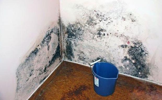 Độc gấp 68 lần asen và 10 lần kali xyanua, thứ chất độc hạng nhất mà WHO cảnh báo hóa ra rất dễ sinh sôi trên 4 món đồ dùng trong nhà bạn - Ảnh 6.