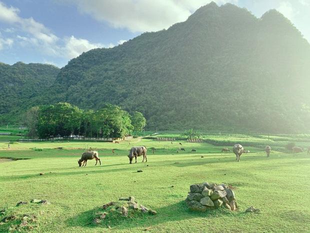 Không ai nghĩ ở Việt Nam có cao nguyên xanh mơn mởn tuyệt đẹp, hạ cánh nơi đây được rồi khỏi đi Thuỵ Sĩ - Ảnh 8.