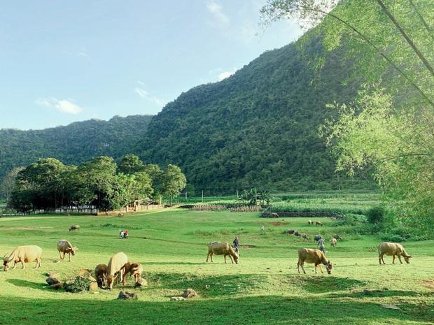 Không ai nghĩ ở Việt Nam có cao nguyên xanh mơn mởn tuyệt đẹp, hạ cánh nơi đây được rồi khỏi đi Thuỵ Sĩ - Ảnh 7.
