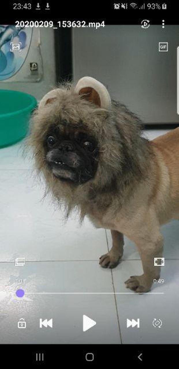 """Háo hức mua phụ kiện cho thú cưng nhưng kết quả lại biến chú cún thành """"chó mặt quỷ"""" khiến dân mạng cười bò - Ảnh 2."""