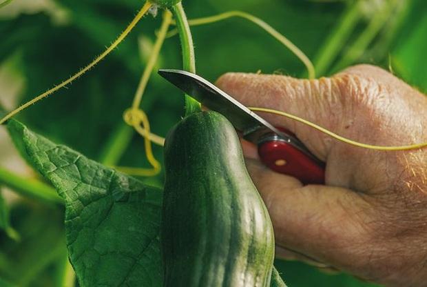 17 mẹo bảo quản giữ thực phẩm tươi ngon lâu hơn: Điều số 7 nhiều người hay nhầm lẫn - Ảnh 27.