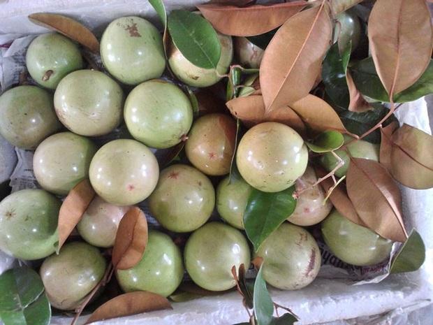 Việt Nam có loạt trái cây đặc sản ngon nức tiếng chỉ được trồng ở vài địa phương, một số loại còn xuất khẩu sang cả nước ngoài - Ảnh 8.