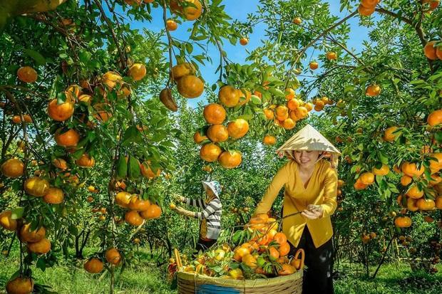 Việt Nam có loạt trái cây đặc sản ngon nức tiếng chỉ được trồng ở vài địa phương, một số loại còn xuất khẩu sang cả nước ngoài - Ảnh 15.