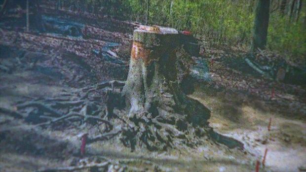Máy bay nổ khiến phi công thiệt mạng nhưng không tìm thấy xác, 70 năm sau người ta sững sờ phát hiện hài cốt chìm dưới rễ cây một cách kì ảo - Ảnh 2.