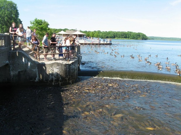 Cảnh tượng đàn cá bơi lúc nhúc gây sởn da gà, ngỡ chỉ xuất hiện trong phim kinh dị mà có thật ở hồ nước độc nhất vô nhị trên thế giới - Ảnh 3.