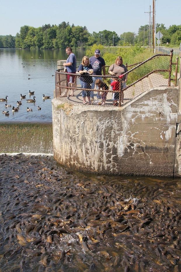 Cảnh tượng đàn cá bơi lúc nhúc gây sởn da gà, ngỡ chỉ xuất hiện trong phim kinh dị mà có thật ở hồ nước độc nhất vô nhị trên thế giới - Ảnh 4.