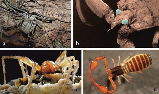 Khoa học đập hộp hang động tách biệt khỏi thế giới suốt 5 triệu năm, và đây là những gì được tìm thấy - Ảnh 2.