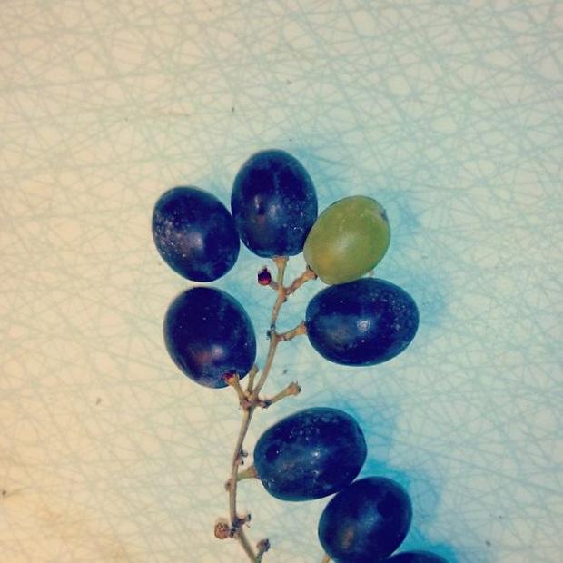 """Những lần dân mạng kinh ngạc trước vẻ ngoài độc lạ của các loại trái cây, quả là bàn tay """"mẹ thiên nhiên"""" tạo ra có khác! - Ảnh 22."""