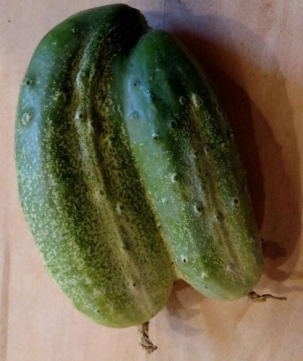 """Những lần dân mạng kinh ngạc trước vẻ ngoài độc lạ của các loại trái cây, quả là bàn tay """"mẹ thiên nhiên"""" tạo ra có khác! - Ảnh 5."""