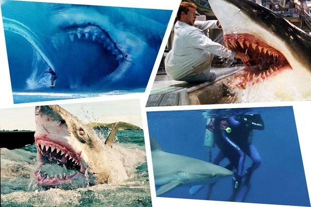 Kỷ lục người chết vì cá mập cắn suốt gần 100 năm tại Úc bị phá vỡ, lý do phía sau còn khiến chúng ta suy ngẫm nhiều hơn - Ảnh 1.