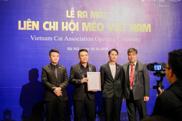 Nhan sắc dàn đại boss trong triển lãm mèo ở Hà Nội: Nét đẹp độc lạ chiếm spotlight hay vẻ cute vô số tội được yêu hơn? - Ảnh 12.
